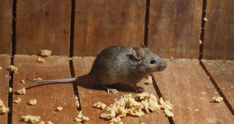 Rid-Of-Mice